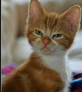 WHAT NO ORDER no offer nothing.🐱🐈